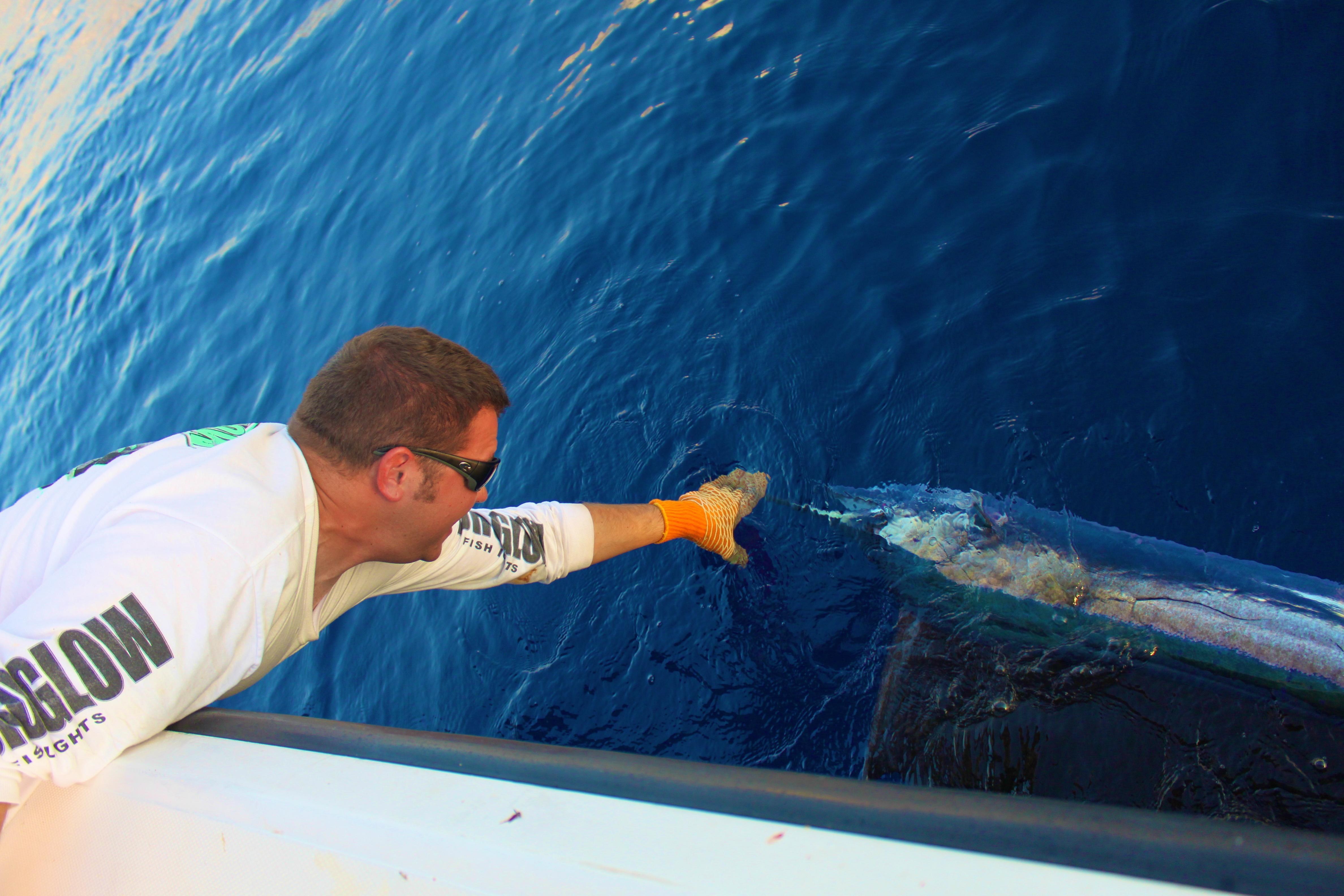 Mahi Mahi Fish Envy Charters
