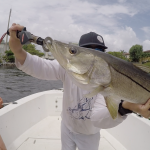 Boca Raton Fishing Report: Snook Bite For Inshore Charters, Goliath Grouper, Wahoo, And Bonito Offshore