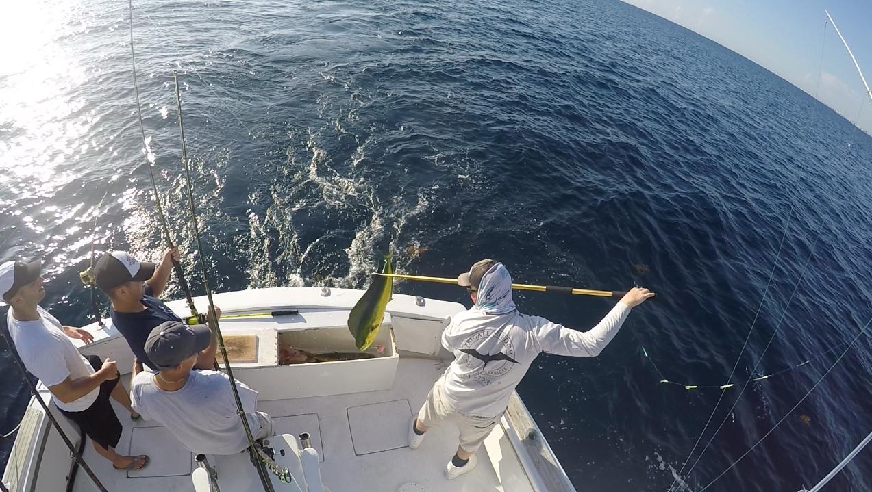 Boca raton mahi mahi fishing charters fish envy charters for Delray beach fishing charters